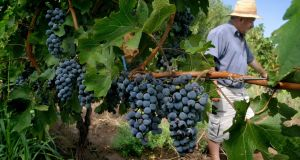 Fecovita, a group of 29 co-operatives in Argentica with 5,000 members controlling 30,000 hectares of vines