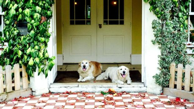 Oscar and George are ready to welcome guests to BrookLodge Hotel in Wicklow.