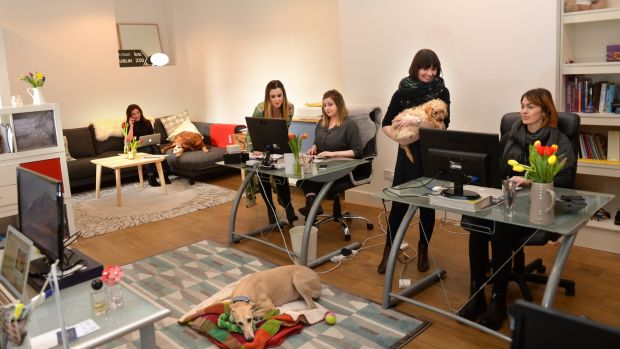 Staff at Host PR, from right, Maeve Shannon, Breffni O'Dwyer, Lucy Finnegan, Maggie McMenamin and Karen Glackin, with dogs Sadie, Flee and Bishop, at their office in South William Street, in Dublin. Photograph: Dara Mac Dónaill / The Irish Times