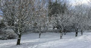 Trees covered in snow in Cashel, Co Tipperary on Sunday morning. Photograph: Carrie Kavanagh