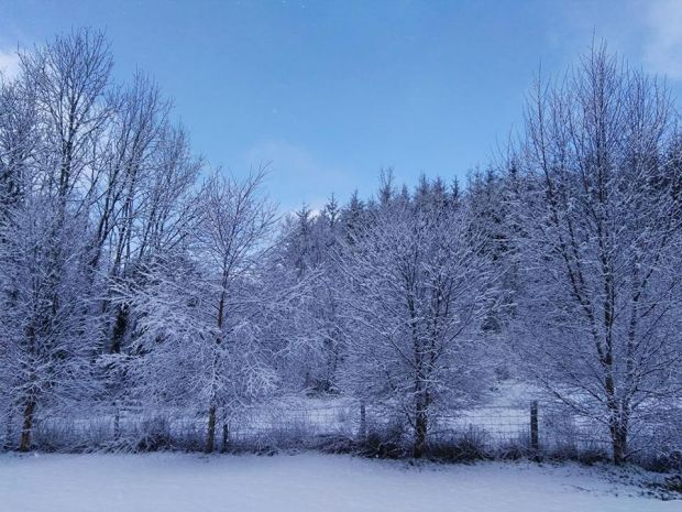 Snow in Carrigallen in Co Leitrim on Sunday morning. Photograph: Kevin McManus