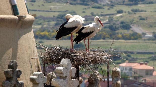 Extremadura: every tower and steeple seems to be topped with a stork's nest. Photograph: iStock/Getty