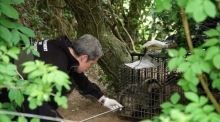 Studies into badger behaviour could help limit the spread of bovine tuberculosis