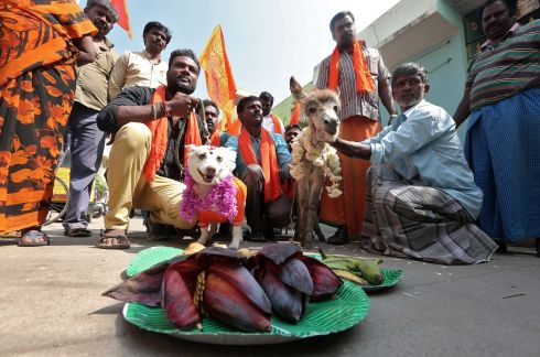 POORLY MATCHED: People pose after staging a wedding of a dog and a donkey to protest against Valentine's Day in Chennai, India. Photograph: P Ravikumar/Reuters