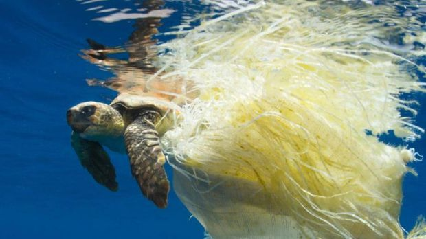 A turtles trapped in plastic on the BBC's Blue Planet 2
