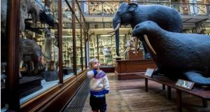 The plan indicates that €15 million is being spent on the Natural History Museum on Merrion Square West, described. Photograph: Brenda Fitzsimons/The Irish Times