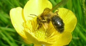 Pollination is necessary for plants to reproduce and the honey bee is a pollinator