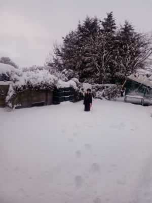Frankie out in the back garden in the magnificent snow in Ballymore Eustace. Photograph: Linda Kerr