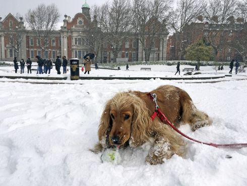 Beauty and the Beast: Donnie enjoying his first snow in St Patrick's Park. Photograph: Jonathan Law