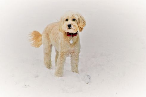 Daisy's first ever snow day. Photograph: Maire O'Neill