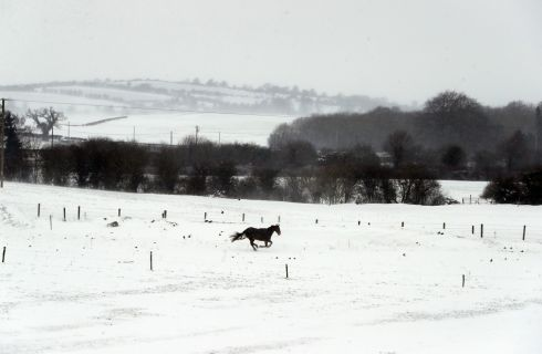 A horse in a snow covered field in Athy, Co Kildare as the severe weather conditions continued. Photograph: Niall Carson/PA