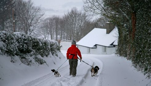 A walker and pets enjoying the snowy landscape at the Glen of the Downs, Delgany, Wicklow.  Photograph Nick Bradshaw