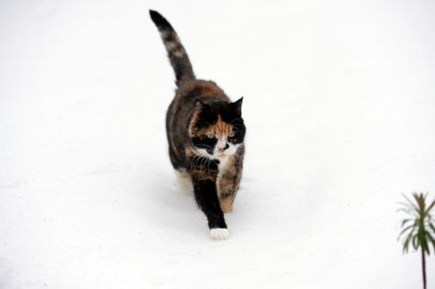 A cat on the prowl in Sandymount, Dublin. Photograph: Frank Miller / The Irish Times
