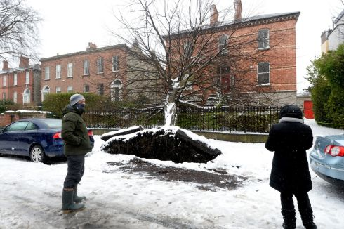 A fallen tree during Storm Emma on Leeson Park in Dublin.  Photograph: Cyril Byrne /The Irish Times