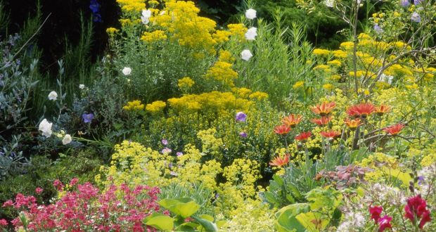 Time to plant perennials but choose flowers that get along colour groupings make for better borders mightylinksfo