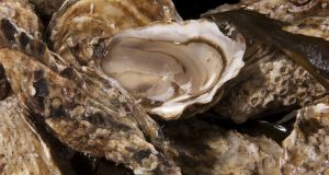 Members of the Lough Swilly Wild Oyster Society have been fishing for native oysters  for about 25 years