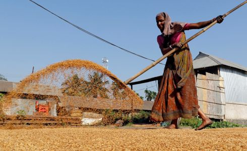 A woman spreads paddy crop for drying at a rice mill  on the outskirts of Agartala, India. Photograph: Jayanta Dey / Reuters