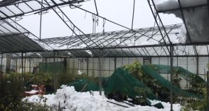 Damage to a glasshouse at Caragh Nurseries in Co Kildare. Photograph: Jo McGarry