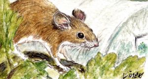 Field mouse by Michael Viney