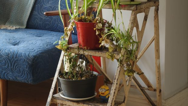 A step-ladder rescued from a studio is home to a family of plants. Photograph: Eoin Rafferty