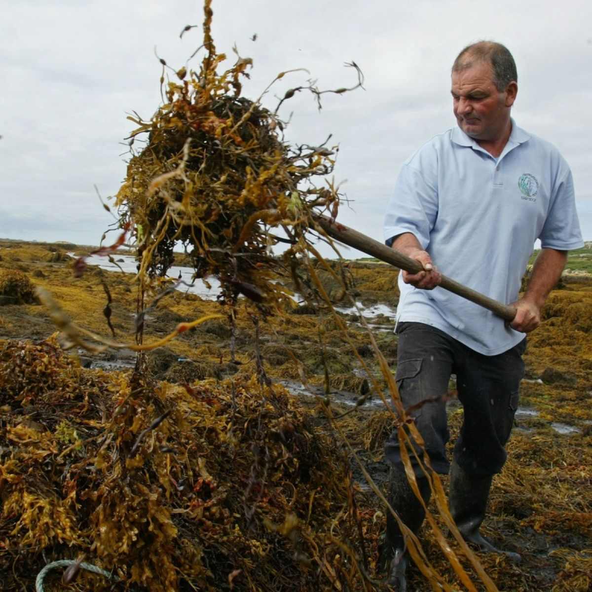 Government to clarify seaweed harvest licensing position
