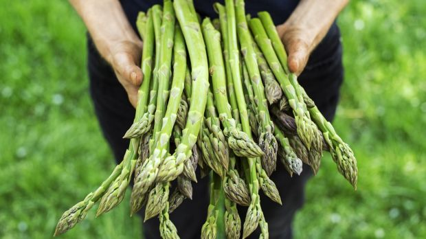 Weather has delayed Irish asparagus, but a bumper crop could be on the way.