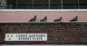 Pigeons on Lower Gardiner Street. Photograph: Nick Bradshaw