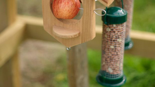 Help birds by keeping bird feeders clean and well-stocked. Photograph: Richard Johnston