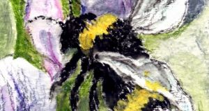Bumblebee at broad bean flowers. Illustration: Michael Viney
