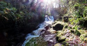 Clare Glens: 'It was worth the exertion to get up close to the cascades and watch the water surging over the cliffs into quiet plunge pools.'