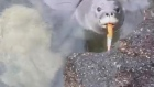 Seal pup recorded playing with knife highlights littering concerns