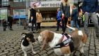 Meet and greet: Dogs make friends at Pets in the City event in Smithfield Square, Dublin. Photograph: Dara Mac Dónaill / The Irish Times