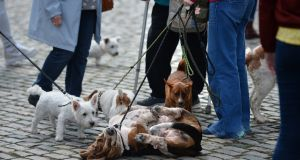 Relaxing in the sun at Pets in the City event in Smithfield Square, Dublin. Photograph: Dara Mac Dónaill / The Irish Times