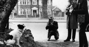 Photographers take pictures of Pickles, the dog who sniffed out the missing Jules Rimet World Cup Trophy, which had been stolen from the National Stamp Exhibition a week earlier, 28th March 1966. Photograph: Central Press/Getty