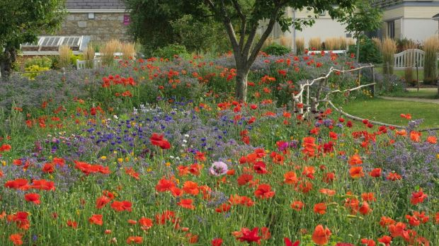 Annual pictorial meadows like this one at Airfield Gardens in Dundrum show how colour can be used in imaginative and enlivening ways in the garden Photo credit Richard Johnston