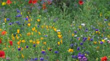 Annual pictorial meadows like this one at Airfield Gardens in Dundrum show how colour can be used in imaginative and enlivening ways in the garden. Photograph: Richard Johnston