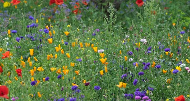 Go wild in the garden: how to sow your own wildflower meadow