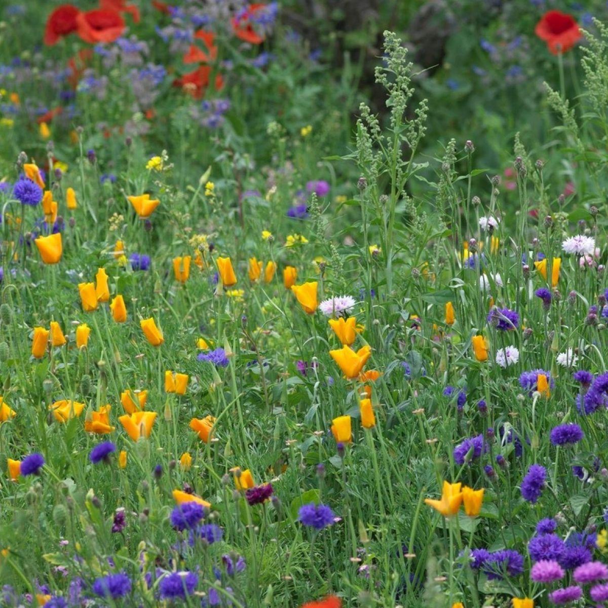 Go wild in the garden how to sow your own wildflower meadow izmirmasajfo