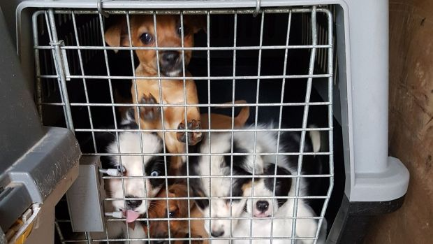 Some of the dogs found in a van in Cairnryan.