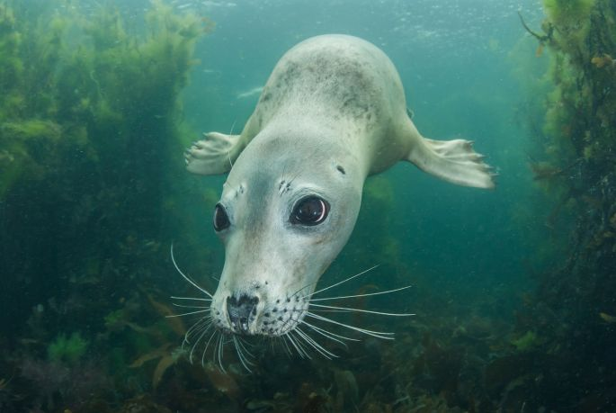 Seal Pup by Nigel Motyer 2st place Category 4