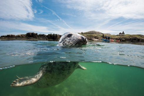 Dalkey Seal by Nigel Motyer 1st place Category 4  Recently the UNESCO Dublin Bay Biosphere Partnership ran an underwater photography competition to help promote the awareness of the underwater marine environment in Dublin Bay.