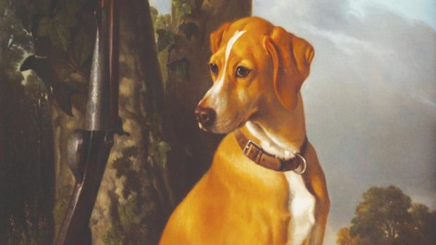 Lot 54, portrait of a hunting dog