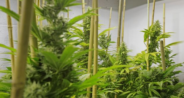 Medicinal cannabis: Where does Ireland stand?