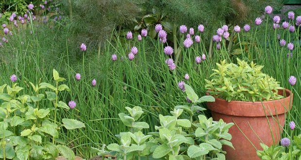 Bon A Small Informal Herb Garden