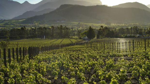 Take a romantic road trip through South Africa's picturesque Cape Winelands, the country's gourmet region, staying in picture postcard towns such as Franschhoek