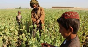 Afghan farmers harvest opium sap in Helmand province. The UN estimates that up to 85 per cent of Afghanistan's poppy cultivation is under Taliban control. Photograph: Noor Mohammad/AFP/Getty Images