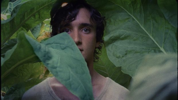 'Happy as Lazzaro' speaks to the people of the Italian countryside with a sincerity that still allows flourishes of romanticism.