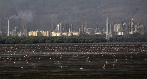 HUNGRY BIRDS: Flamingos filter through mudflats in their quest to eat plankton in front of an industrial area at Sewri mudflats near the Arabian Sea coast in Mumbai, India. Migratory birds arrive in the winter season from different parts of India and neighbouring countries, and usually leave the region again in the spring months.  Photograph: Divyakant Solanki/EPA