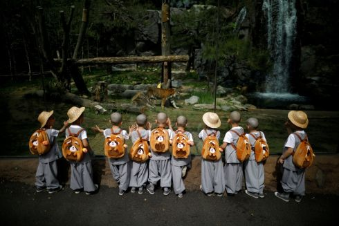 KEEP IT ZEN: Young boys undergoing the experience of Buddhist monks by staying in a temple for two weeks as novice monks, look at a tiger at the Everland amusement park in Yongin, South Korea. Photograph: Kim Hong-Ji/Reuters