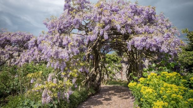 A Way With Wisteria How To Grow This Magnificent Hardy Climber